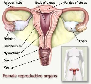 Sistem Peranakan Wanita