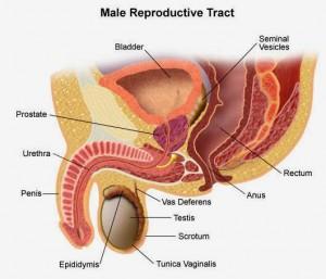 Zink Shaklee Mengubati Penyakit Kalenjar Prostant