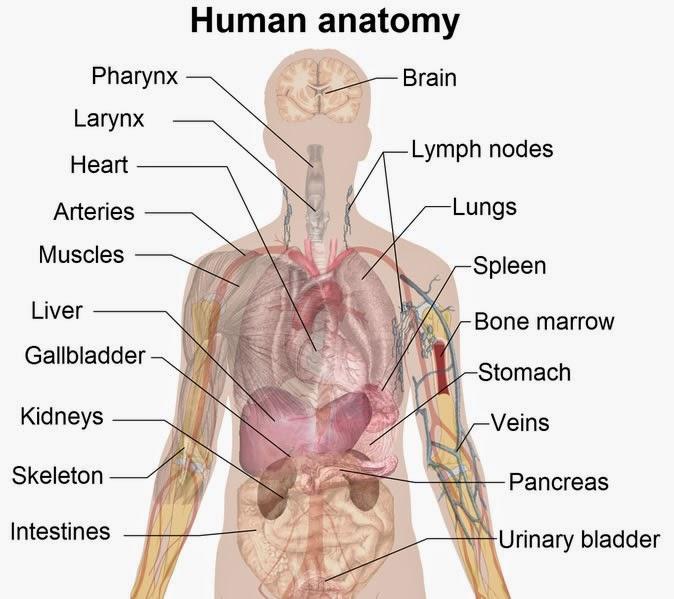 Bagaimana Untuk Mengenali Tanda-Tanda Awal Badan Berpenyakit (Bahagian 1)