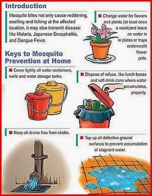 Cara Untuk Mencegah Demam Denggi