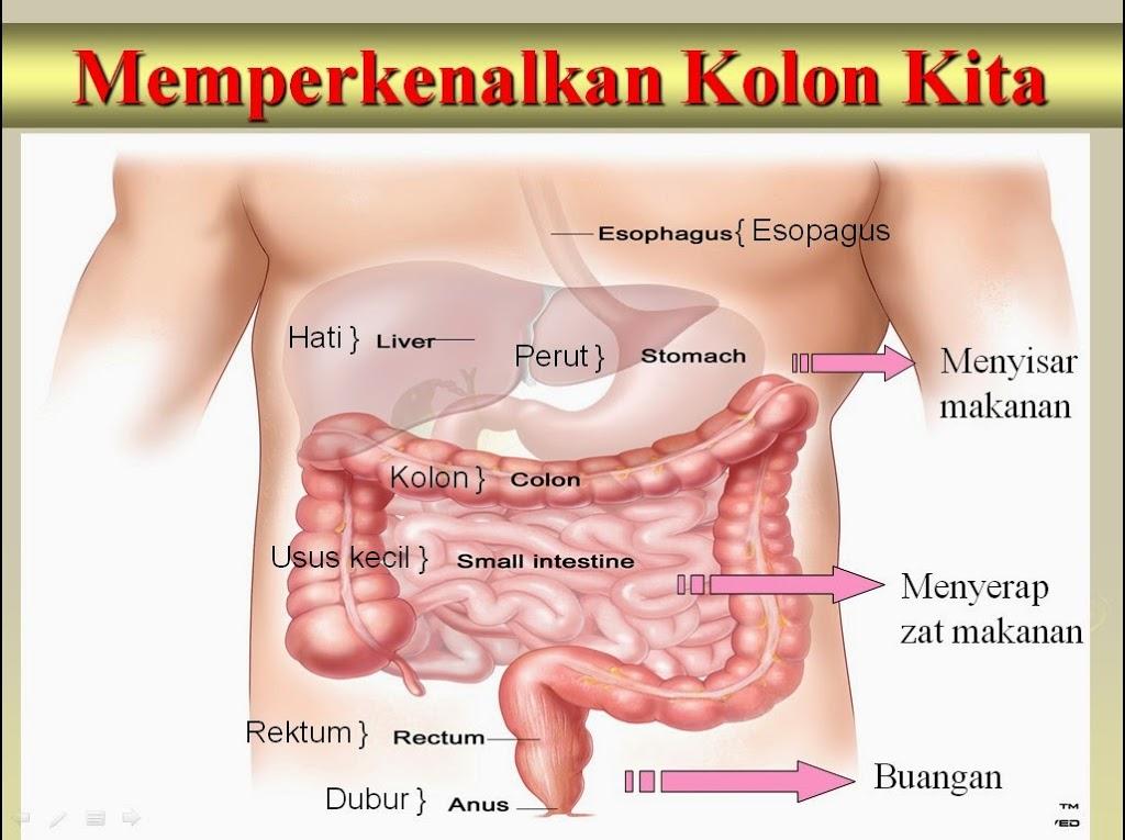 Perlu detok usus dahulu bahi penyerapan tinggi