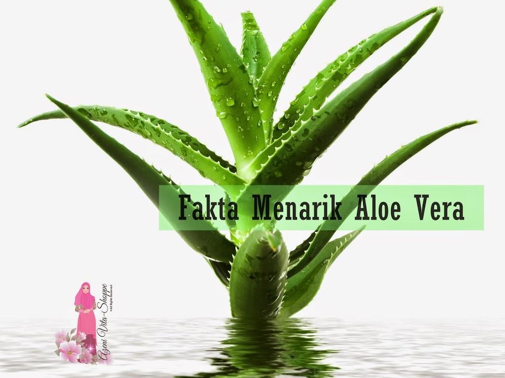 Aloe Vera Ataupun Kulit Lidah Buaya: Pahit Tetapi Banyak Khasiatnya